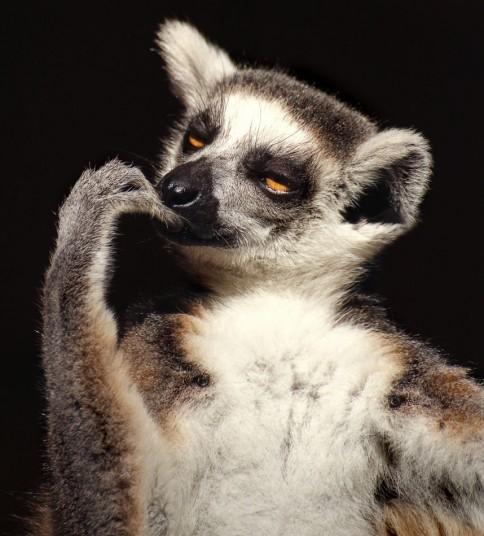 [Image: thinking-lemur.jpg?w=640]